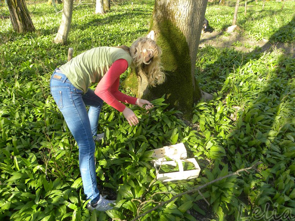 Kräuterhexe beim Bärlauchpflücken