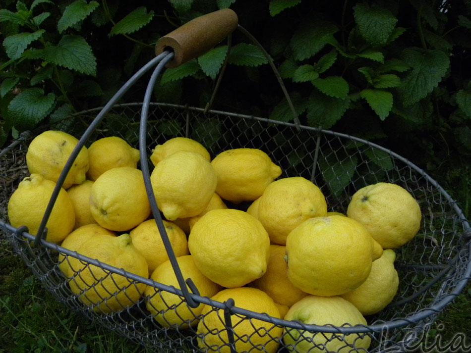 Zitronensegen
