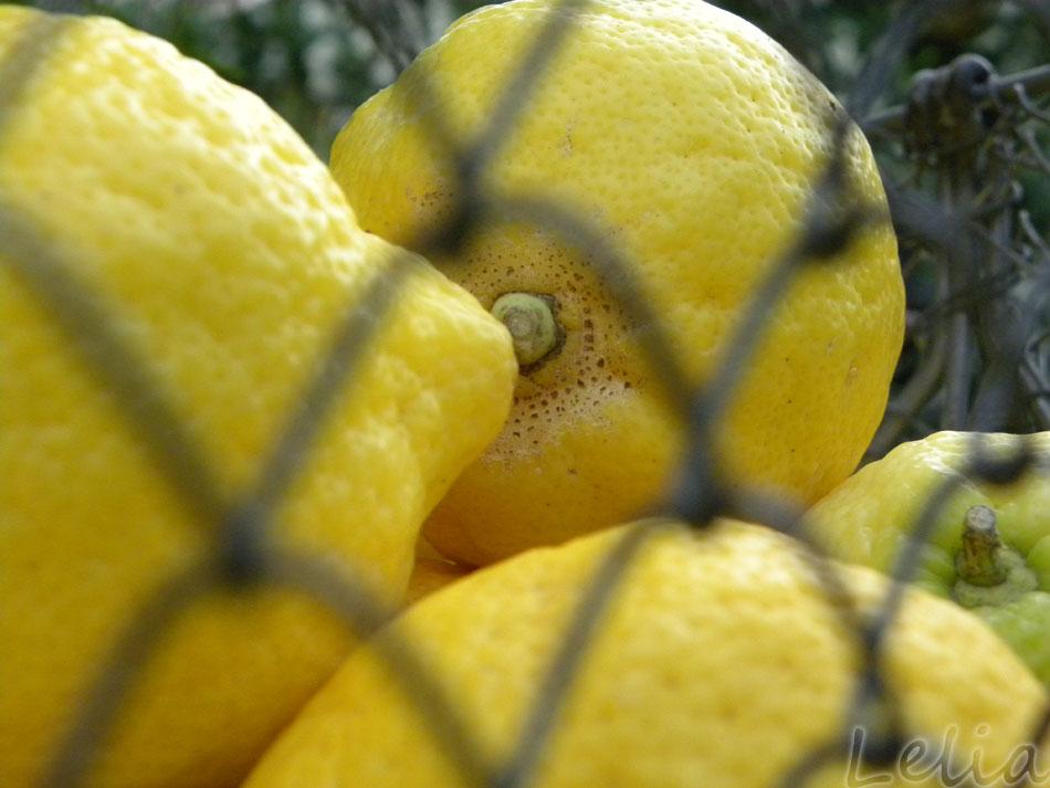 Zitronenhimmel