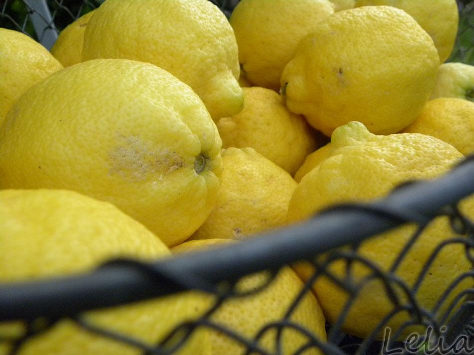 Zitronenherrlichkeit