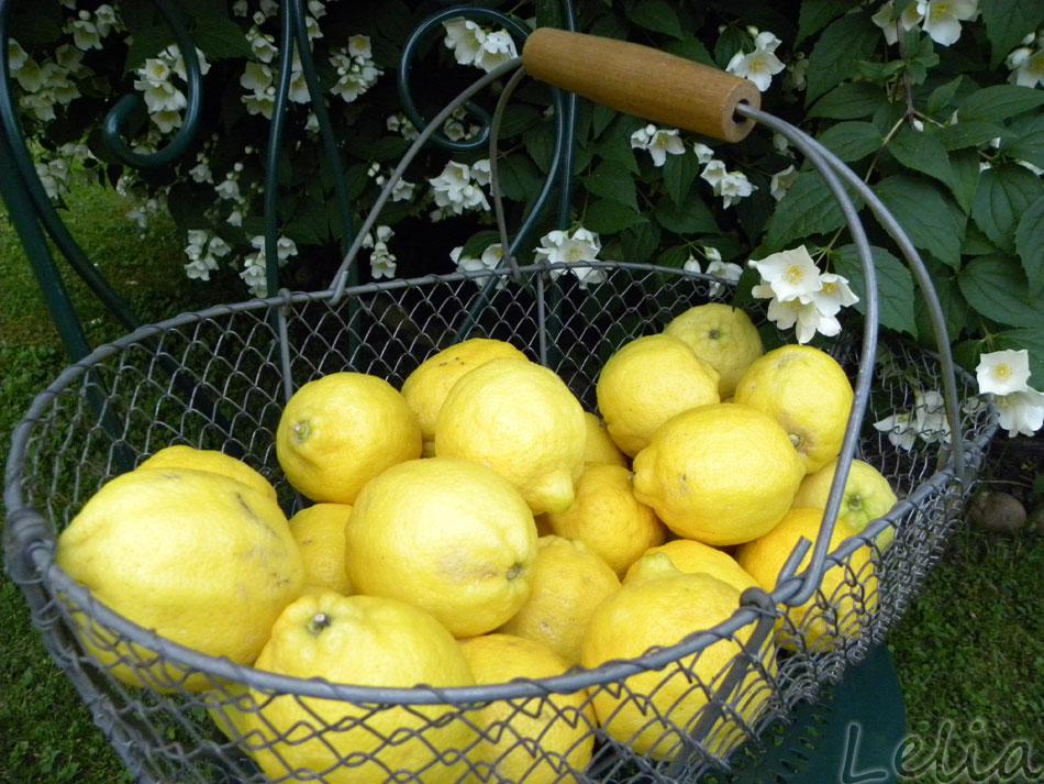 Zitronenglück