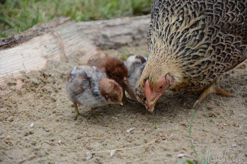 Nachwuchs aus dem Ei